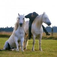 Пьер Флёри (Pierre Fleury) - фото 14724599_1322731277758214_925717248974628197_n-200x200, главная Разное Фото , конный журнал EquiLIfe