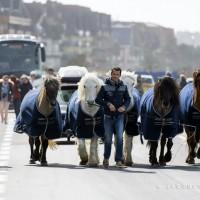 Пьер Флёри (Pierre Fleury) - фото 1926641_975244672506878_7588830822739589602_n-200x200, главная Разное Фото , конный журнал EquiLIfe