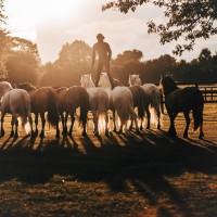 Пьер Флёри (Pierre Fleury) - фото 21016146_1684472381584100_3372085460007470686_o-200x200, главная Разное Фото , конный журнал EquiLIfe