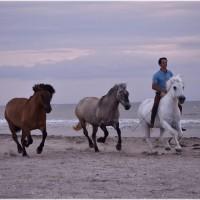Пьер Флёри (Pierre Fleury) - фото 25626823_1811717175526286_2274228483872078122_o-200x200, главная Разное Фото , конный журнал EquiLIfe