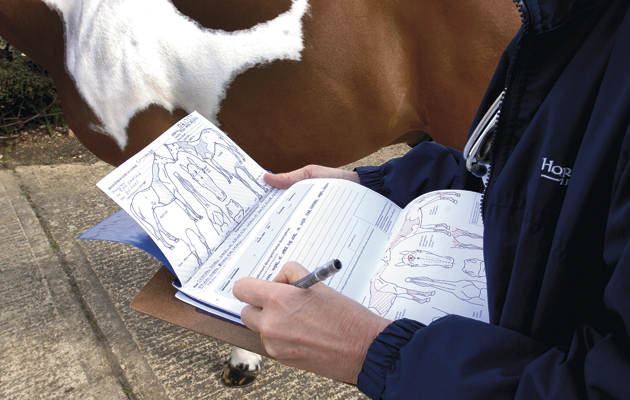 Идентификация лошадей ч.1 - фото 4842800, Здоровье лошади Содержание лошади , конный журнал EquiLIfe