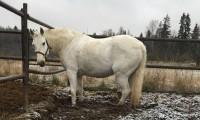 Лошадь в леваде