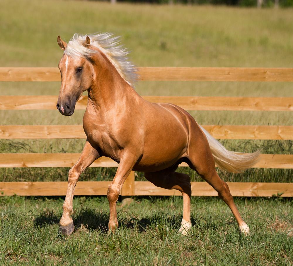 Разнообразие мастей лошадей - фото Pal4, главная Интересное о лошади Разное , конный журнал EquiLIfe