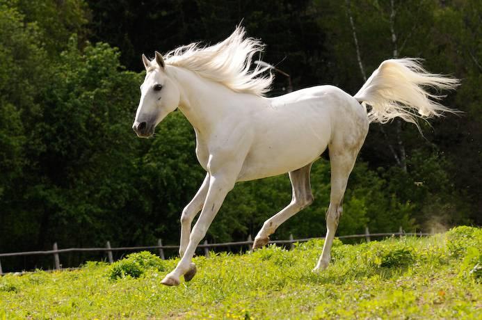 Разнообразие мастей лошадей - фото kazachya-za-kazachego-konya, главная Интересное о лошади Разное , конный журнал EquiLIfe