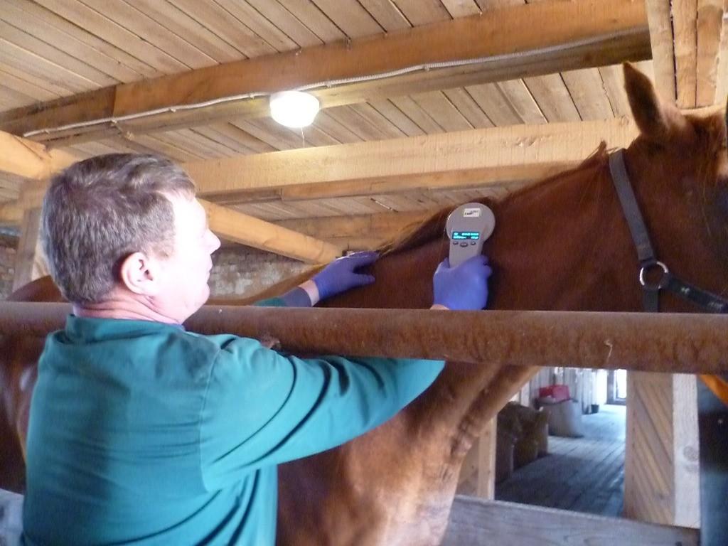 Важная информация о чипировании спортивных лошадей ФКСР - фото p1060744_jpg, главная Новости , конный журнал EquiLIfe