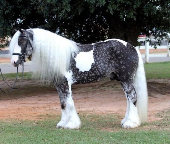 Разнообразие мастей лошадей - фото s1200, главная Интересное о лошади Разное , конный журнал EquiLIfe