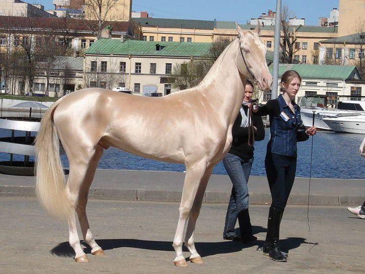 Разнообразие мастей лошадей - фото unique-horse-colors-0, главная Интересное о лошади Разное , конный журнал EquiLIfe