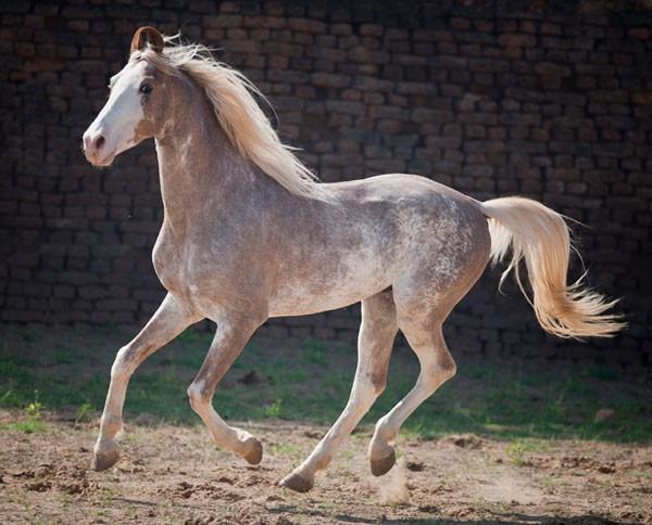Разнообразие мастей лошадей - фото unique-horse-colors-9, главная Интересное о лошади Разное , конный журнал EquiLIfe