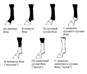 ноги-копия - фото -копия-300x257, , конный журнал EquiLIfe