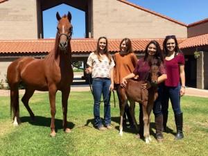 Ферма по разведению арабских лошадей в Помоне - фото 13062040_10101162039999472_3791208190657094020_n1-300x225, Конюшня Разное , конный журнал EquiLIfe
