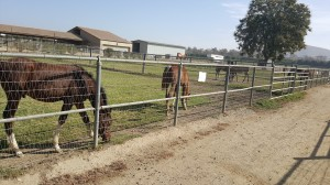 Ферма по разведению арабских лошадей в Помоне - фото 20171114_105615-300x168, Конюшня Разное , конный журнал EquiLIfe