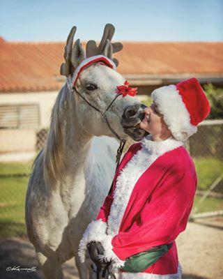 Ферма по разведению арабских лошадей в Помоне - фото 25006399_1998858113728918_5423685663461474304_n, Конюшня Разное , конный журнал EquiLIfe