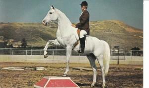 Ферма по разведению арабских лошадей в Помоне - фото 3760755_orig1-300x177, Конюшня Разное , конный журнал EquiLIfe