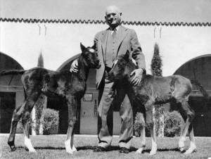 Ферма по разведению арабских лошадей в Помоне - фото Kellogg.txt-300x226, Конюшня Разное , конный журнал EquiLIfe