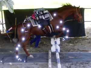 Ферма по разведению арабских лошадей в Помоне - фото anakin-jump-e1449728081928-300x2241, Конюшня Разное , конный журнал EquiLIfe