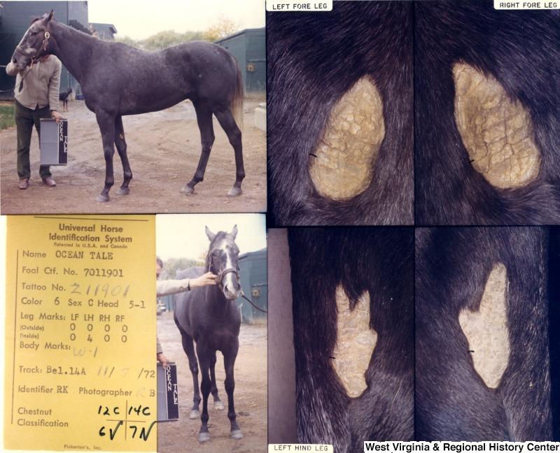 Идентификация лошадей ч.2 - фото digitalImage, главная Содержание лошади , конный журнал EquiLIfe
