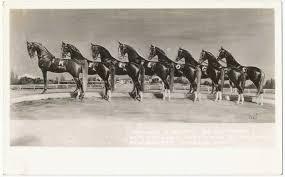 Ферма по разведению арабских лошадей в Помоне - фото imagesZK3YH1U41, Конюшня Разное , конный журнал EquiLIfe