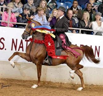 Ферма по разведению арабских лошадей в Помоне - фото large22, Конюшня Разное , конный журнал EquiLIfe
