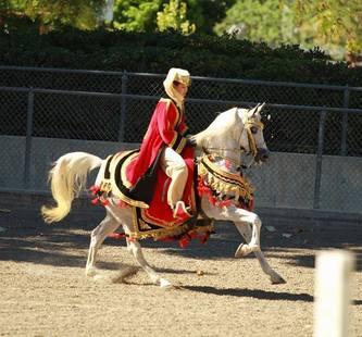 Ферма по разведению арабских лошадей в Помоне - фото large3, Конюшня Разное , конный журнал EquiLIfe