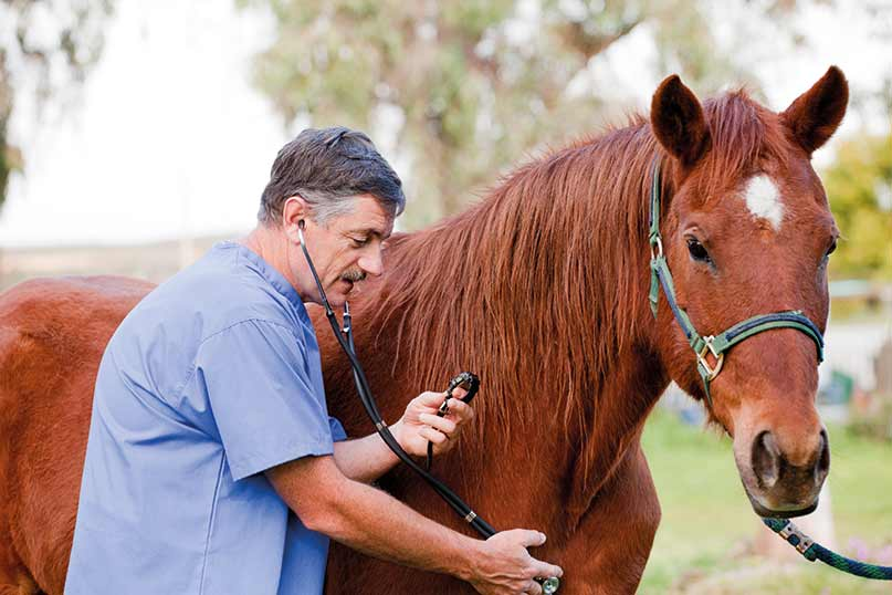 Бесплатная лошадь - сыр в мышеловке? - фото pet-insurance-8, главная Содержание лошади , конный журнал EquiLIfe
