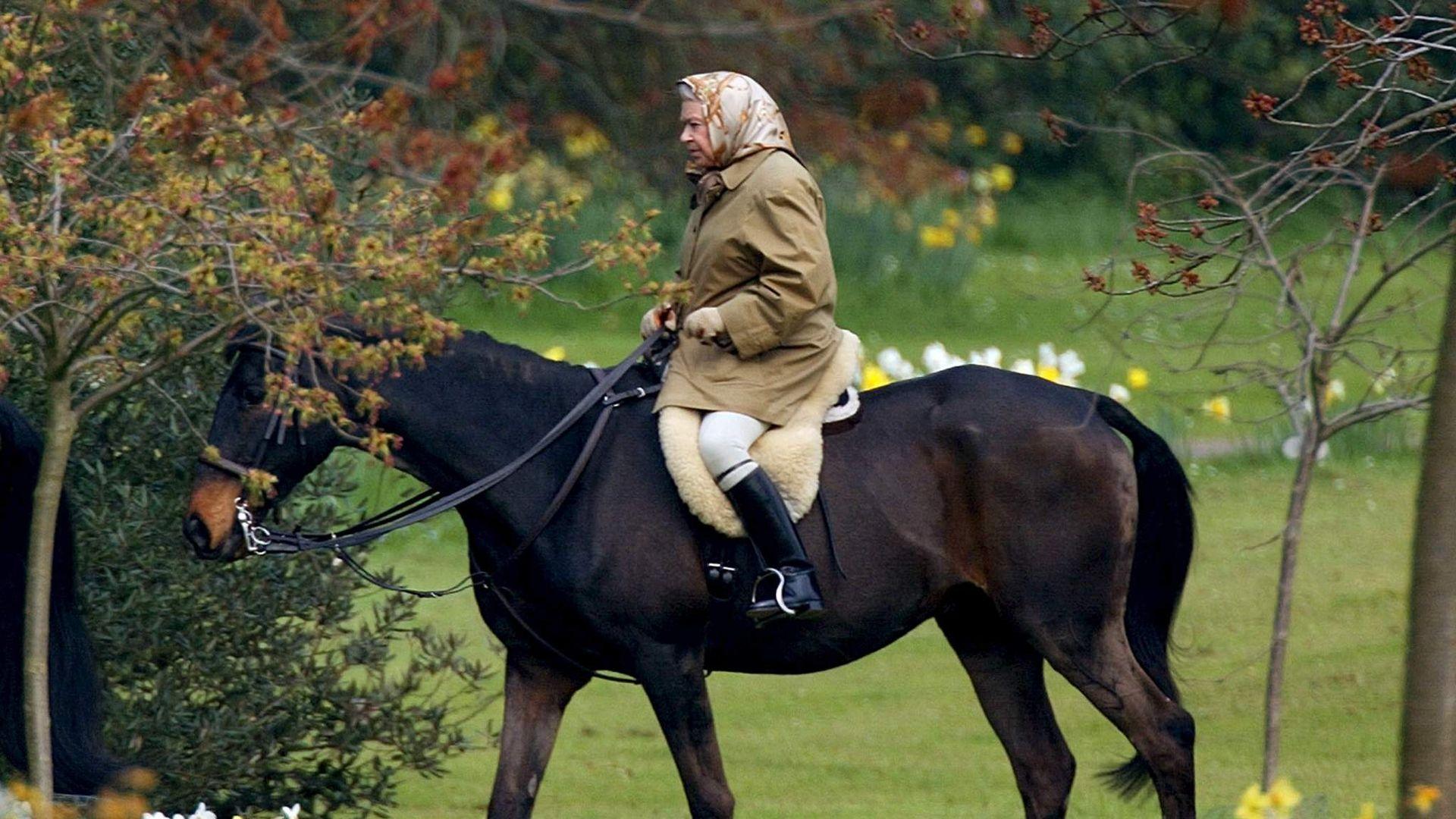 Бесплатная лошадь - сыр в мышеловке? - фото rtx29wov-1-2048x1536_3466727, главная Содержание лошади , конный журнал EquiLIfe
