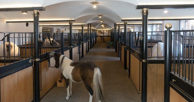 Чистим конюшню после зимы- 5 этапов проверки конюшни - фото stall-2677850_1280-770x405, главная Здоровье лошади Пастбище Содержание лошади , конный журнал EquiLIfe
