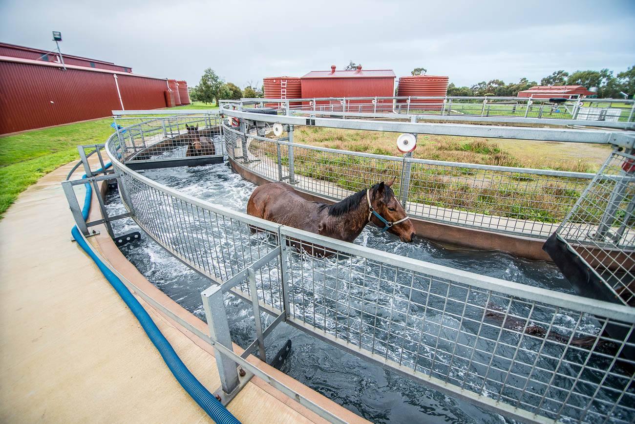 Площадки для работы лошадей - фото 1414980_993302034051253_282055170212135511_o, главная Содержание лошади Тренинг , конный журнал EquiLIfe