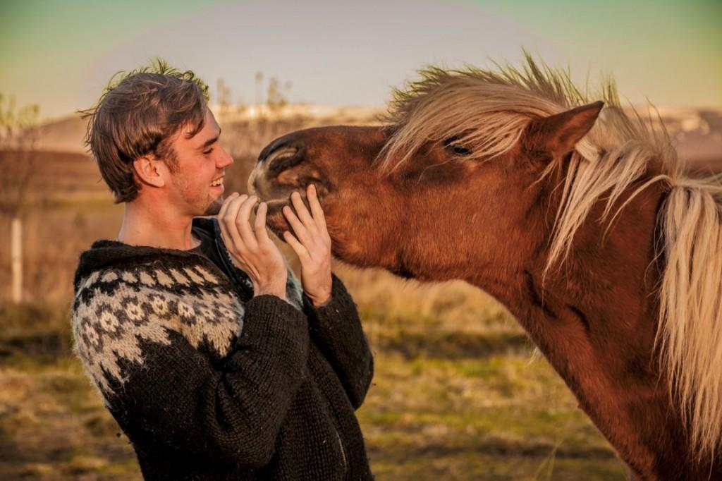 Лошади способны запоминать человеческие эмоции - фото 15.3-hestamynd-2-1024x682, Новости , конный журнал EquiLIfe