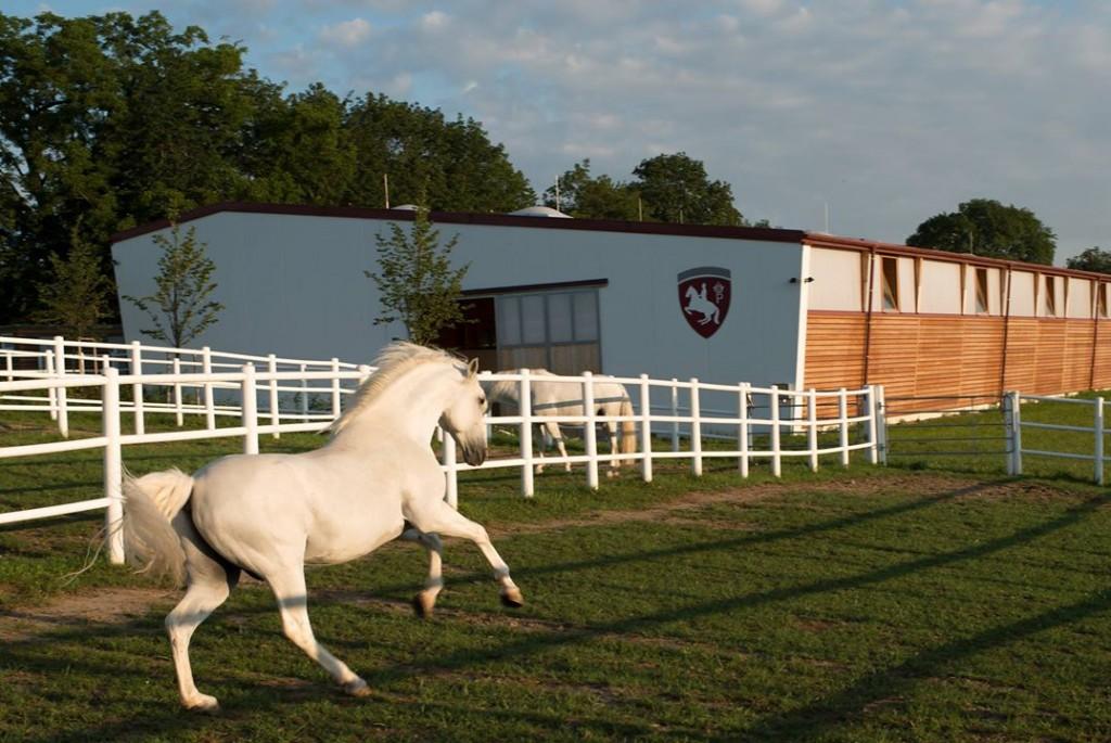 Площадки для выгула, моциона и работы лошадей - фото 1798885_10152270613466097_4200882551468133866_o-1024x685, главная Содержание лошади , конный журнал EquiLIfe