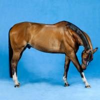 Фотограф Шелли Брайденбах - фото 3ARm8odqOFs-200x200, главная Фото , конный журнал EquiLIfe