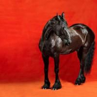 Фотограф Шелли Брайденбах - фото 6khcNFbeKpo-200x200, главная Фото , конный журнал EquiLIfe