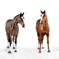 Фотограф Шелли Брайденбах - фото 6zXVFKyYLTo-200x200, главная Фото , конный журнал EquiLIfe