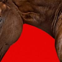 Фотограф Шелли Брайденбах - фото BD0ClVEyBIs-200x200, главная Фото , конный журнал EquiLIfe