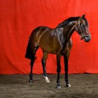 Фотограф Шелли Брайденбах - фото BsO58exgDvs-200x200, главная Фото , конный журнал EquiLIfe