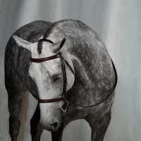 Фотограф Шелли Брайденбах - фото H9HmNdoo6kM-200x200, главная Фото , конный журнал EquiLIfe