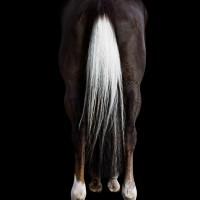 Фотограф Шелли Брайденбах - фото Nii-coDvHw-200x200, главная Фото , конный журнал EquiLIfe