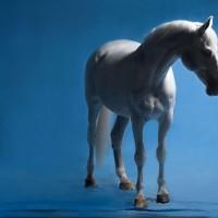 Фотограф Шелли Брайденбах - фото XJe-XEBMGA-200x200, главная Фото , конный журнал EquiLIfe