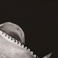 Фотограф Шелли Брайденбах - фото ZzI3usRTkiE-200x200, главная Фото , конный журнал EquiLIfe