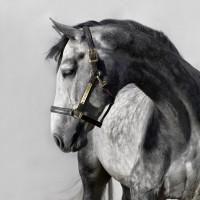 Фотограф Шелли Брайденбах - фото aaYCHj6MnE-200x200, главная Фото , конный журнал EquiLIfe