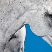 Фотограф Шелли Брайденбах - фото amIQ4AQKjl0-200x200, главная Фото , конный журнал EquiLIfe