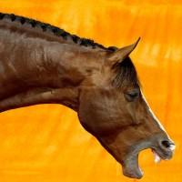 Фотограф Шелли Брайденбах - фото e8R61EEpF_Q-200x200, главная Фото , конный журнал EquiLIfe