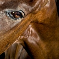 Фотограф Шелли Брайденбах - фото go9dYA2l_vg-200x200, главная Фото , конный журнал EquiLIfe