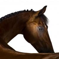 Фотограф Шелли Брайденбах - фото hMY1sjXgITM-200x200, главная Фото , конный журнал EquiLIfe