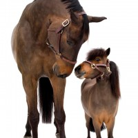 Фотограф Шелли Брайденбах - фото jwptXwCQim0-200x200, главная Фото , конный журнал EquiLIfe