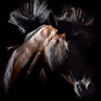 Фотограф Шелли Брайденбах - фото msSz8ecdq10-200x200, главная Фото , конный журнал EquiLIfe