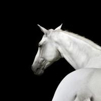 Фотограф Шелли Брайденбах - фото r5Ak1sNa_lA-200x200, главная Фото , конный журнал EquiLIfe