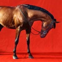 Фотограф Шелли Брайденбах - фото sny1juQkPBM-200x200, главная Фото , конный журнал EquiLIfe
