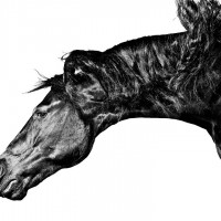 Фотограф Шелли Брайденбах - фото tUVhNp3l-d8-200x200, главная Фото , конный журнал EquiLIfe