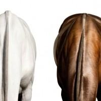 Фотограф Шелли Брайденбах - фото xyDxidTvns4-200x200, главная Фото , конный журнал EquiLIfe