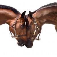 Фотограф Шелли Брайденбах - фото zwJoGuLAlzY-200x200, главная Фото , конный журнал EquiLIfe